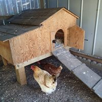 Our first coop